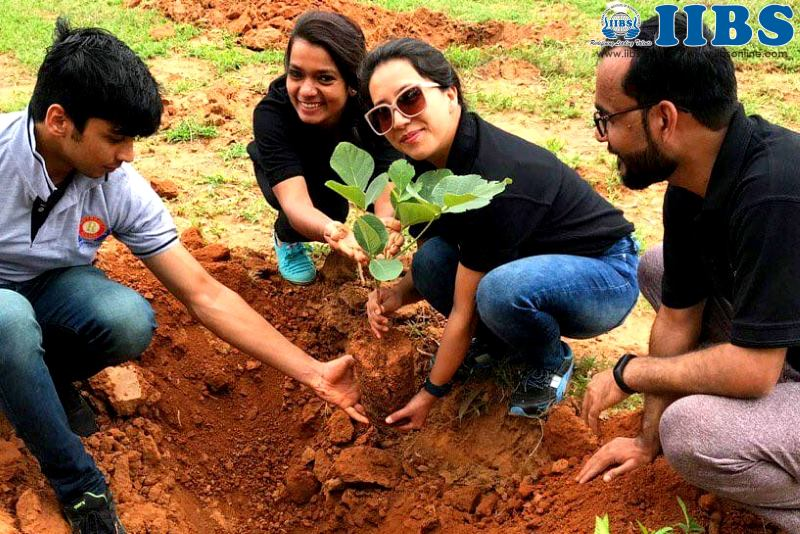 Tree Plantation on Independence Day at IIBS Bangalore